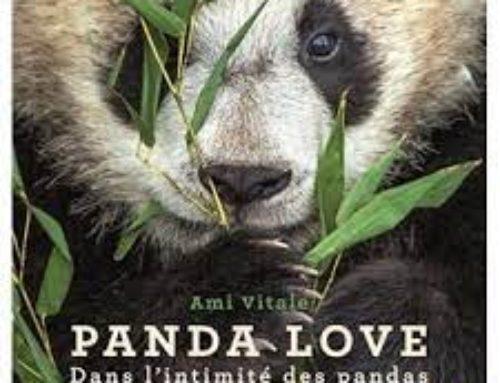 PANDA LOVE , de  Ami Vitale